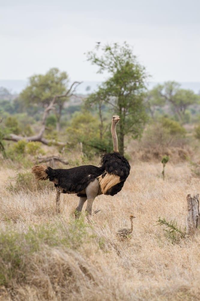 Kruger National Park-101