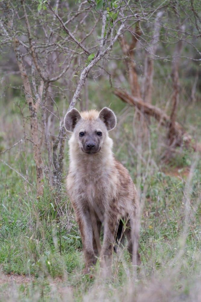 Kruger National Park-103