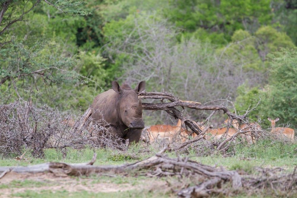 Kruger National Park-105