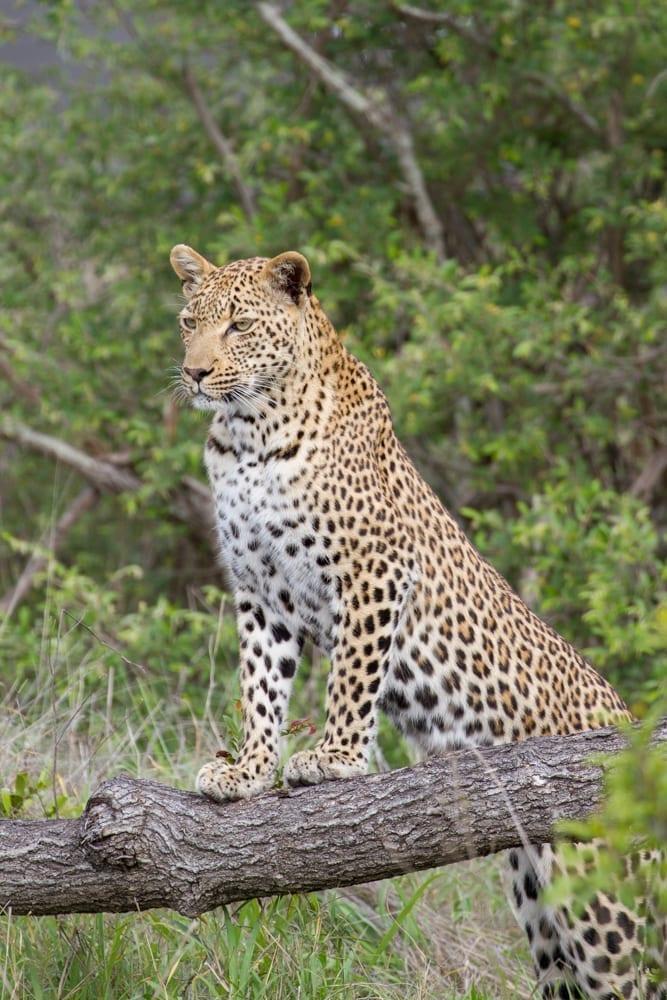 Kruger National Park-107