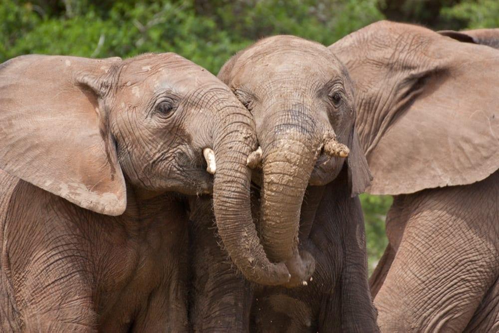 Kruger National Park-15