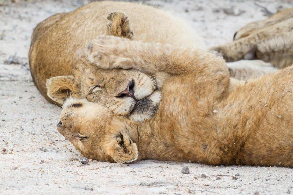 Kruger National Park-20
