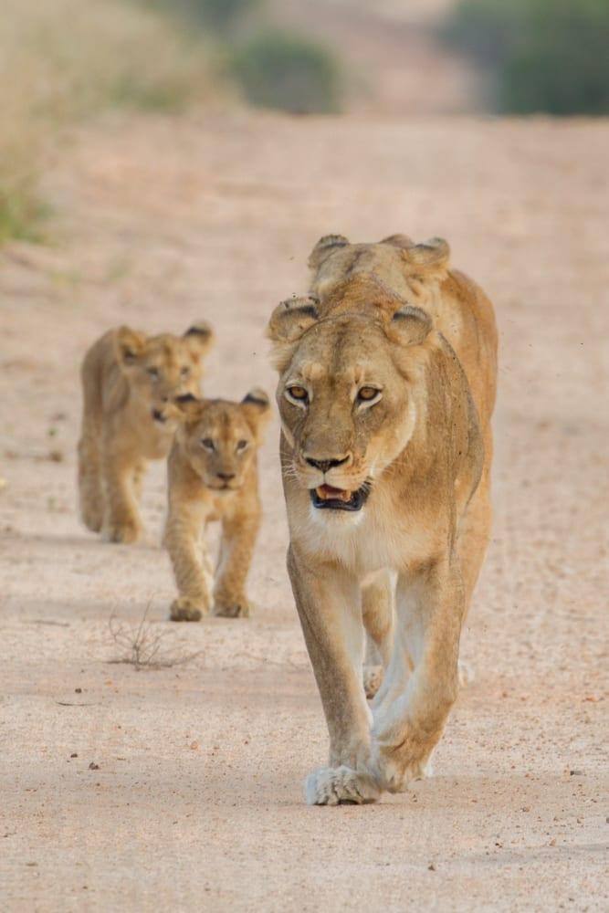 Kruger National Park-26