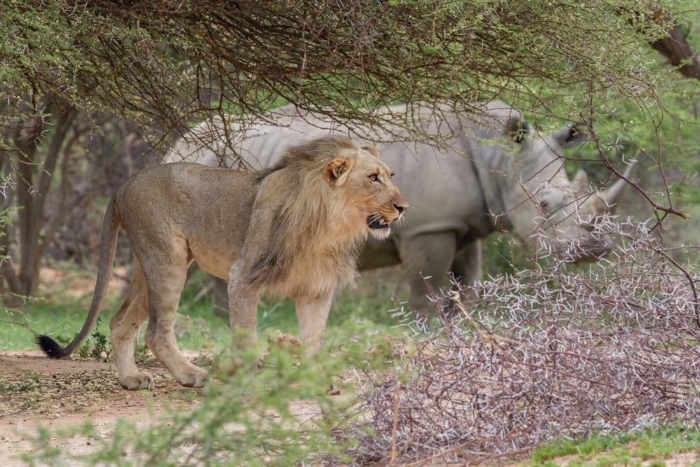 Kruger National Park-38