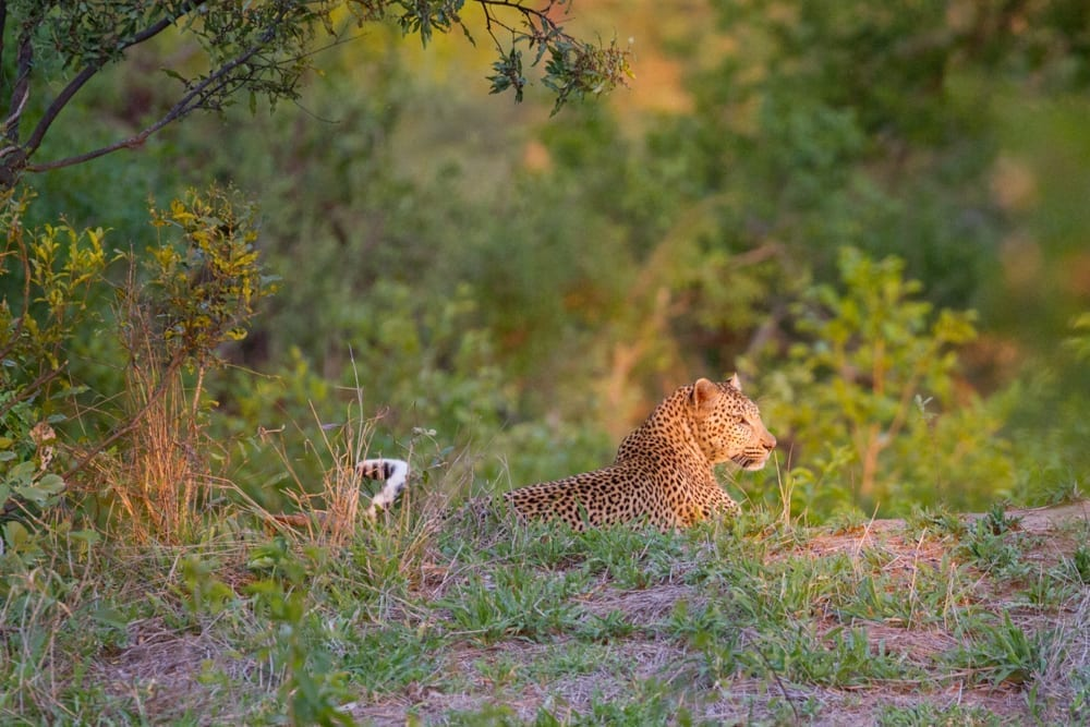 Kruger National Park-56