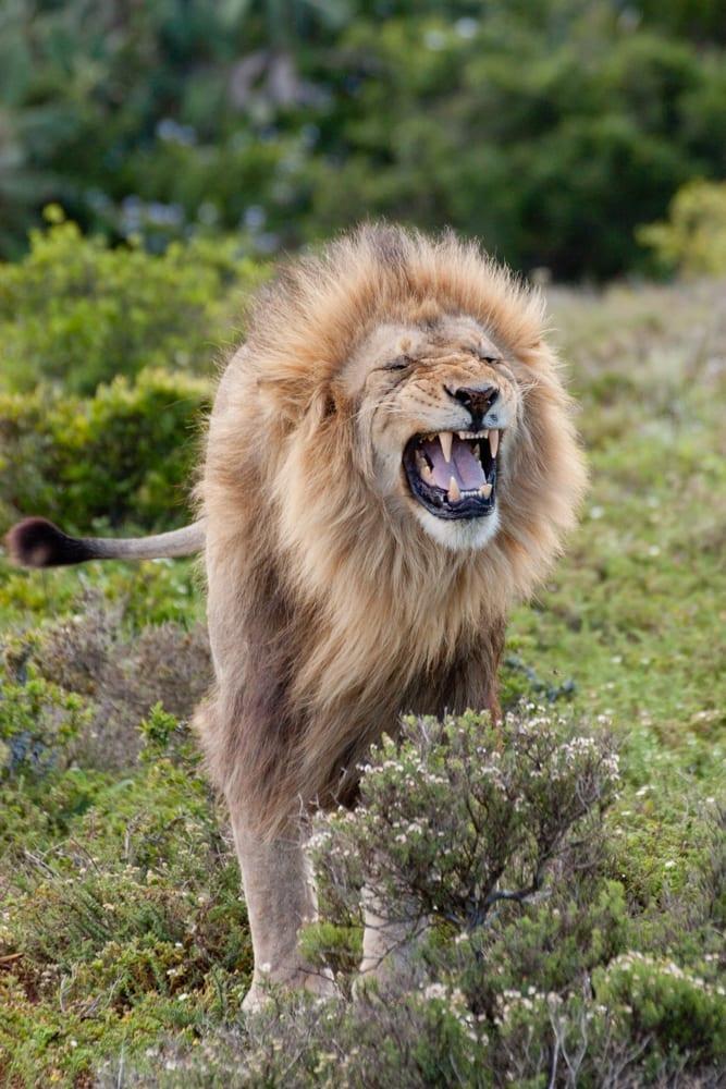 Kruger National Park-63