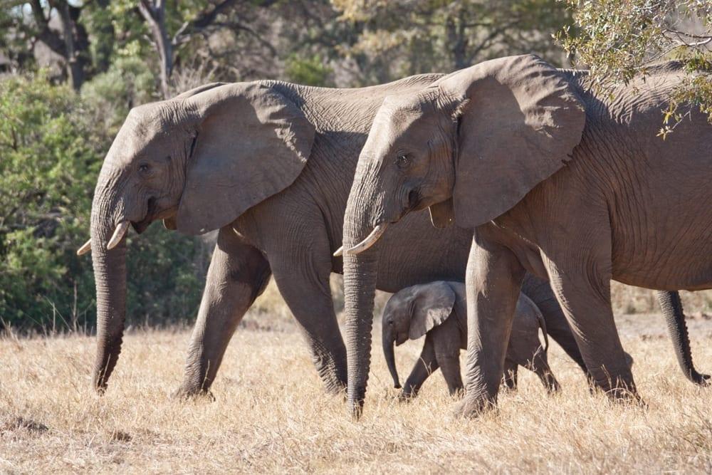 Kruger National Park-67