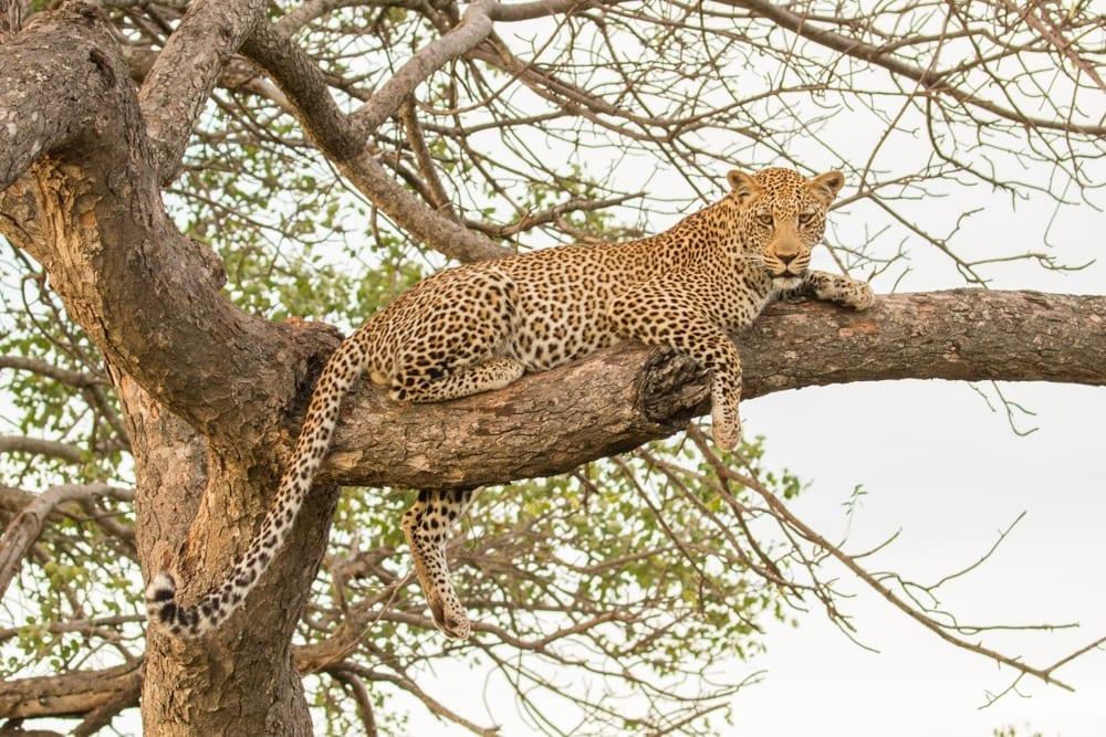 Kruger National Park-78
