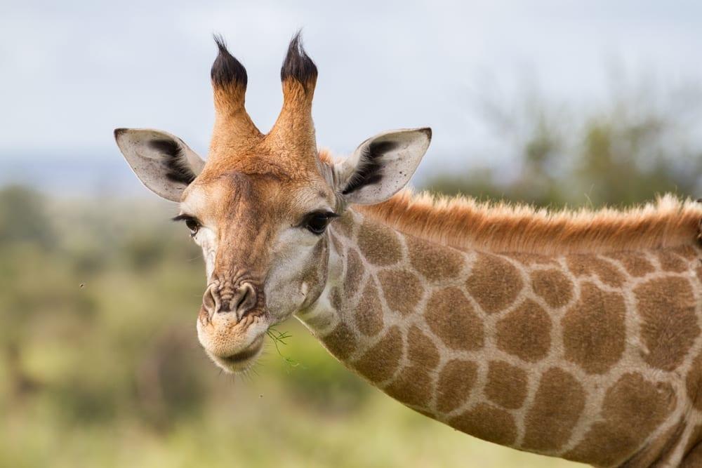 Kruger National Park-79