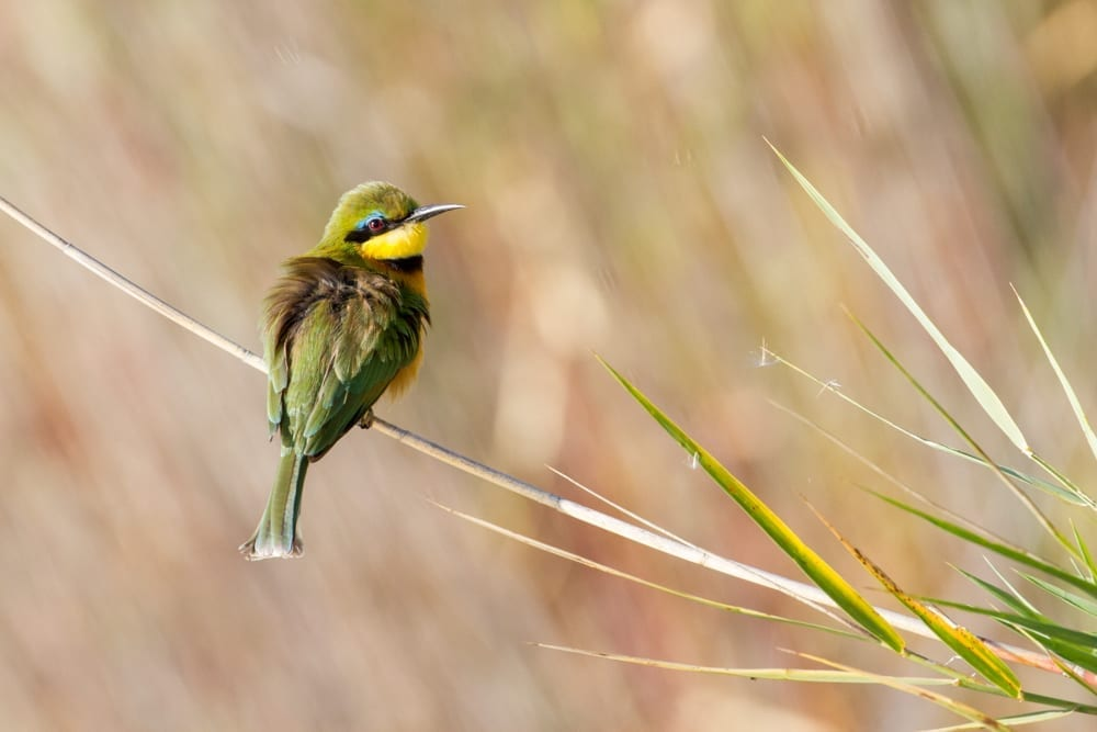 Kruger National Park-81