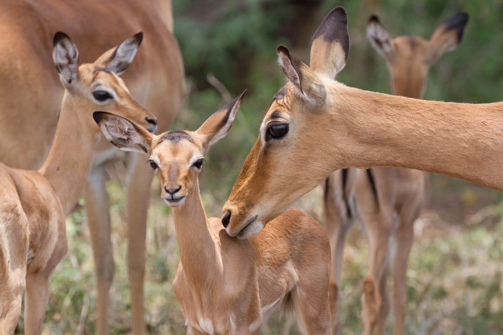 Kruger National Park-91