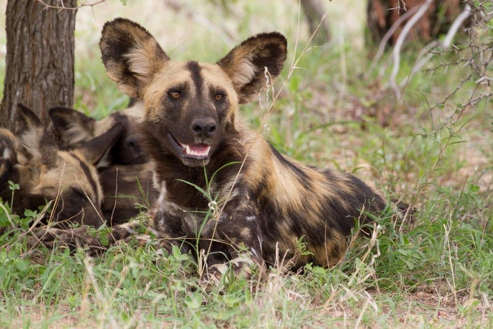 Kruger National Park-93