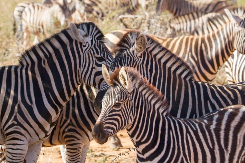 Kruger National Park-84