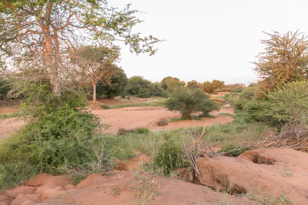 Hoedspruit Wildlife Estate-4