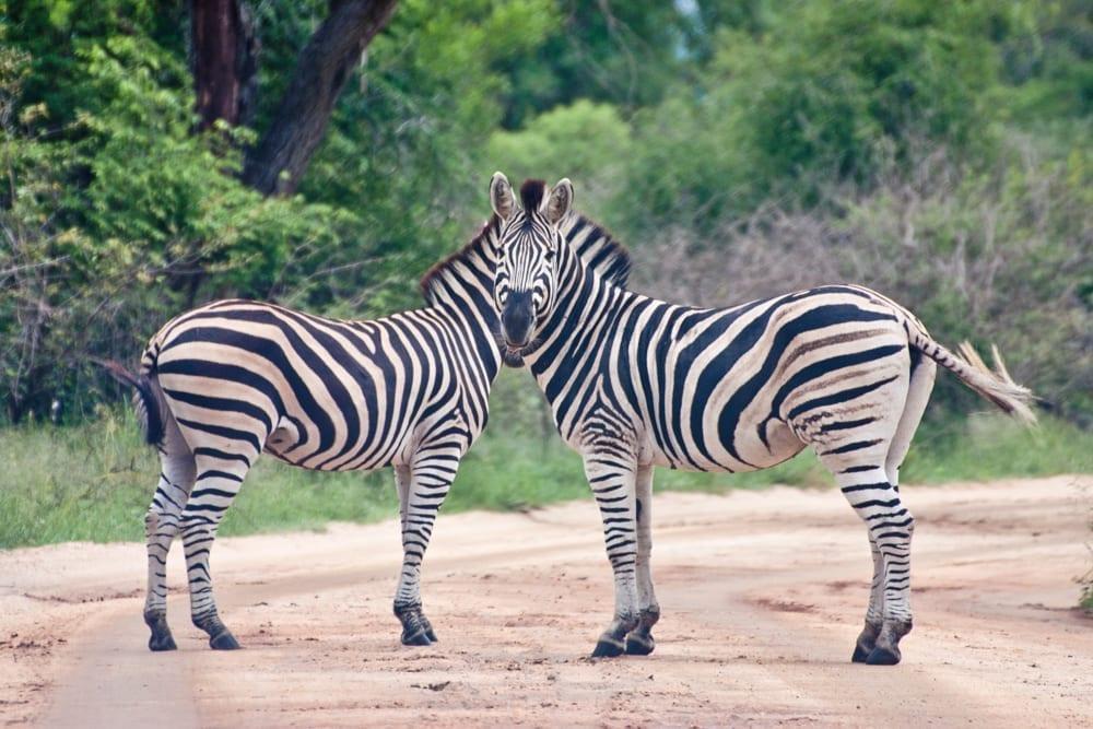 Kruger National Park-12
