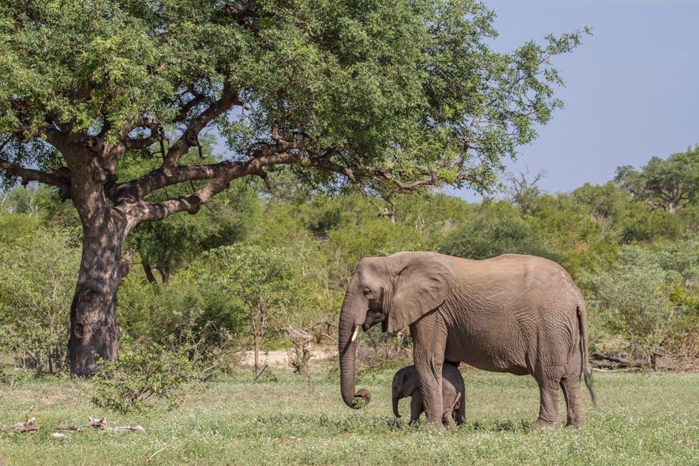Kruger National Park-18
