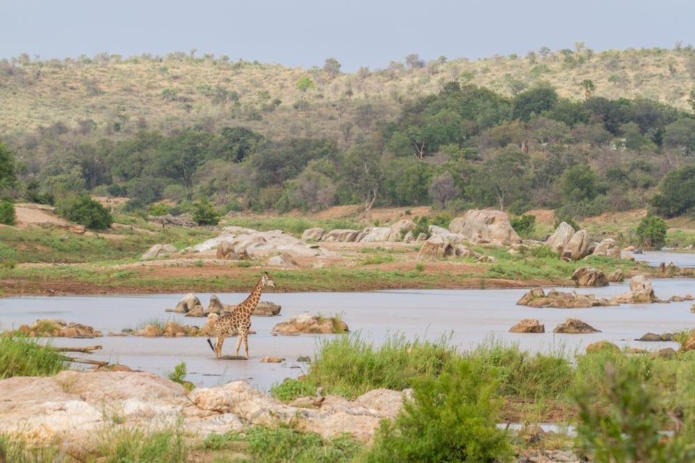 Kruger National Park-23