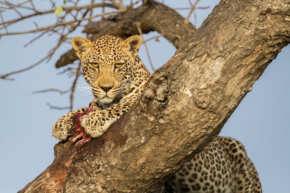 Kruger National Park-24