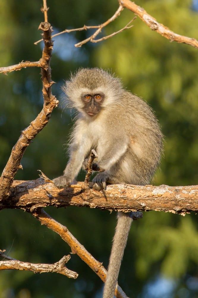 Kruger National Park-28