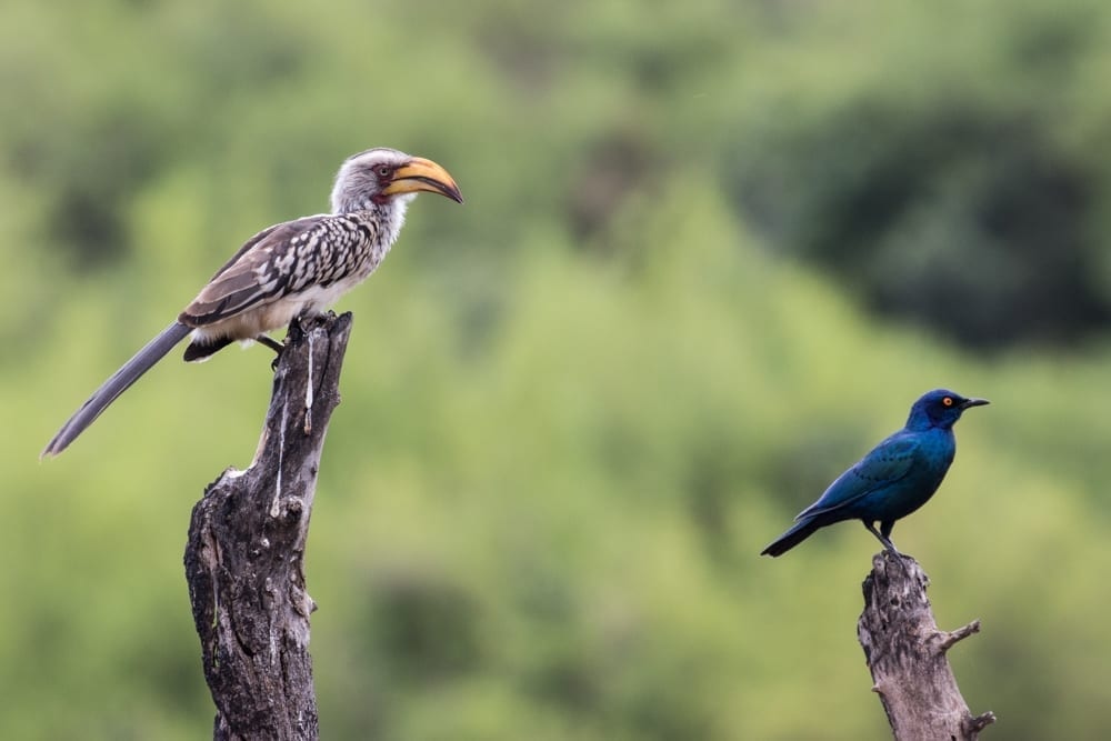 Kruger National Park-3