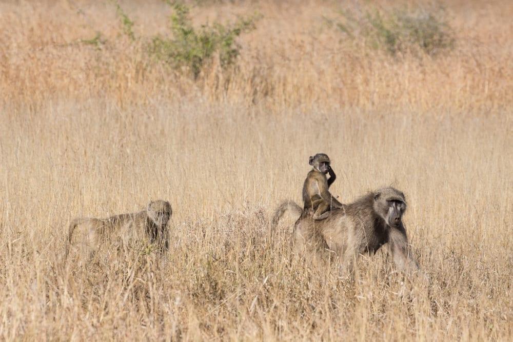 Kruger National Park-4
