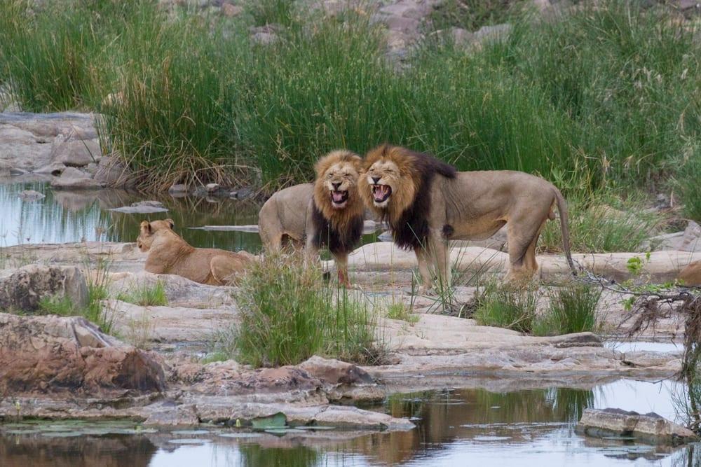 Kruger National Park-52