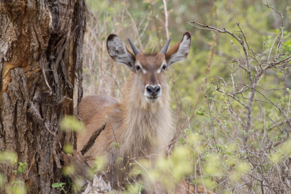 Kruger National Park-92