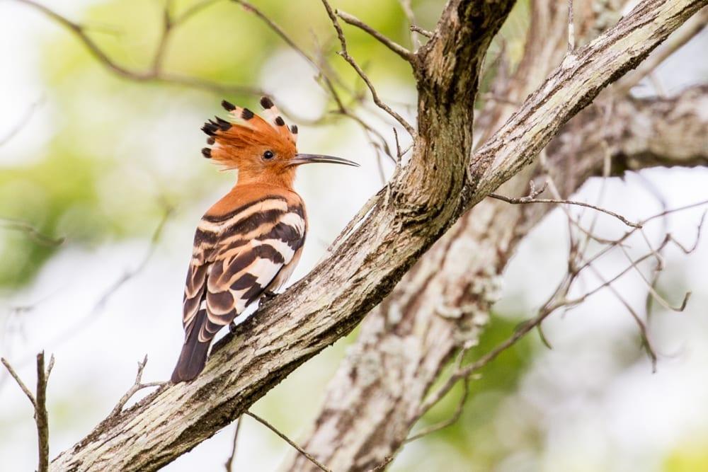 Kruger National Park-95