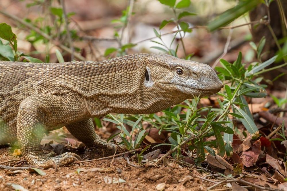 Kruger National Park-99